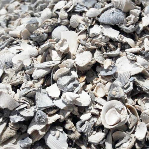 crushed shell