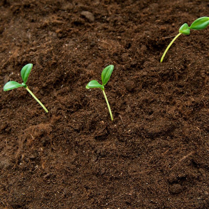 Florida Soil